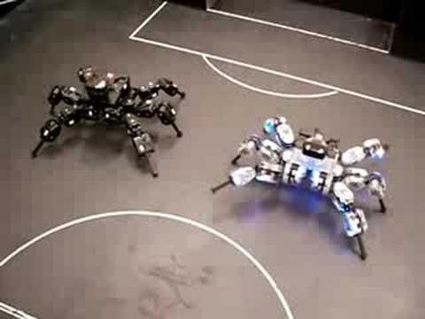 """""""Combate"""" entre """"arañas"""" robóticas RoboBuilder (RO-BOTICA.com)"""