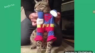 Funny Cat Videos Pt-1