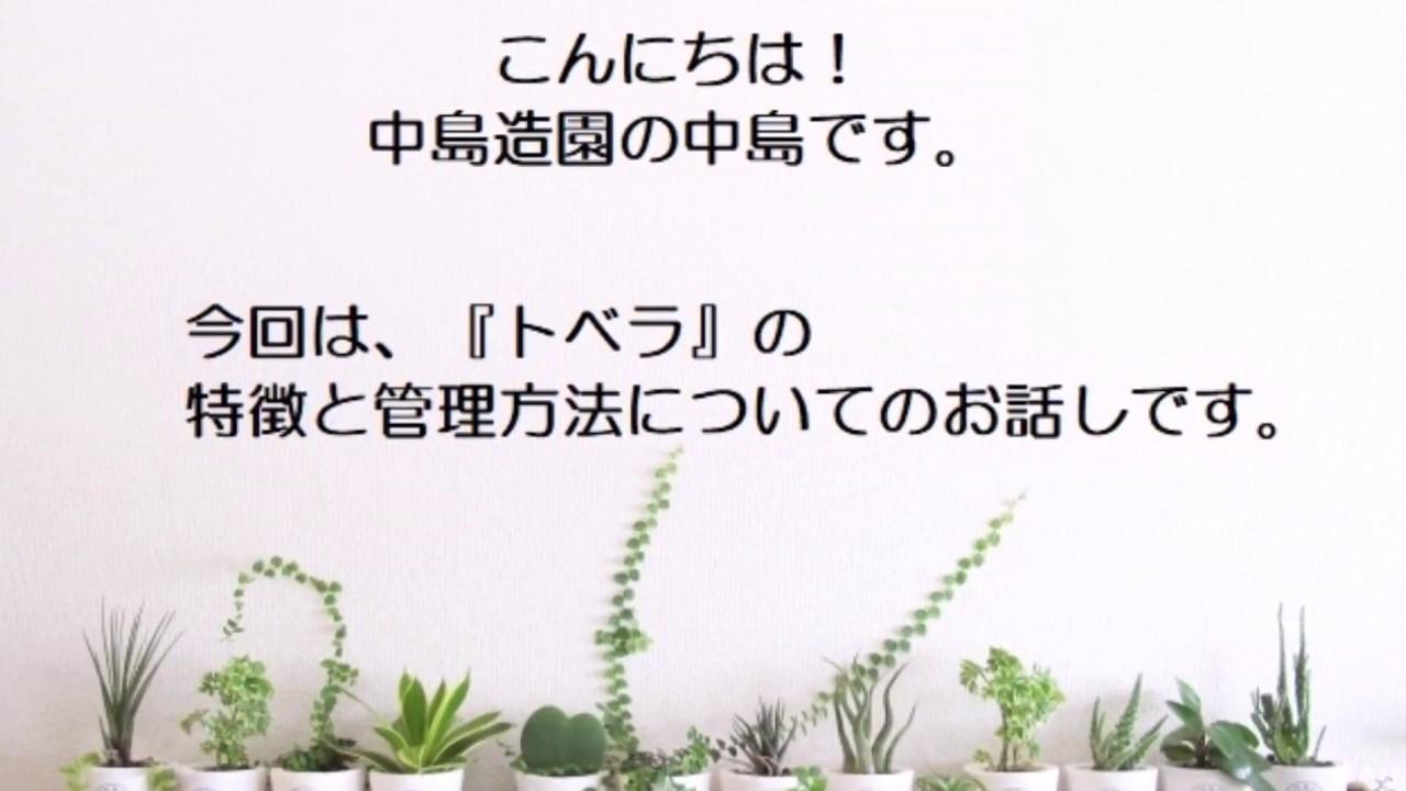 トベラの画像 p1_36