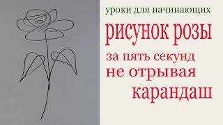 Рисунок розы за пять секунд не отрывая карандаш