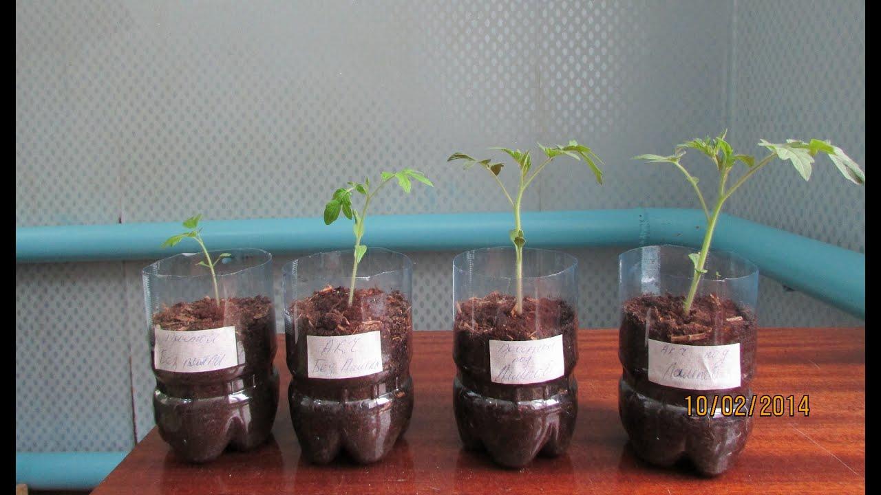 Сколько времени досвечивать рассаду перца 5