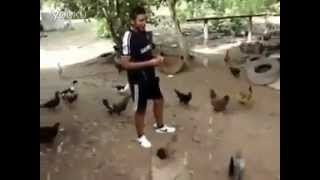 Lord of the chickens :)