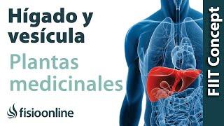 Todas las plantas medicinales para el hígado y vesícula biliar.