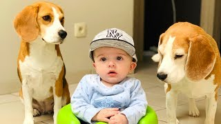 How is Life with Dogs and A Baby?  First 4 Months Compilation : Funny Dogs Louie and Marie