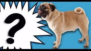 Bu Köpeğin Cinsi Ne? - Ödüllü İnteraktif Yarışma