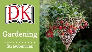 How to Grow Strawberries in a Basket