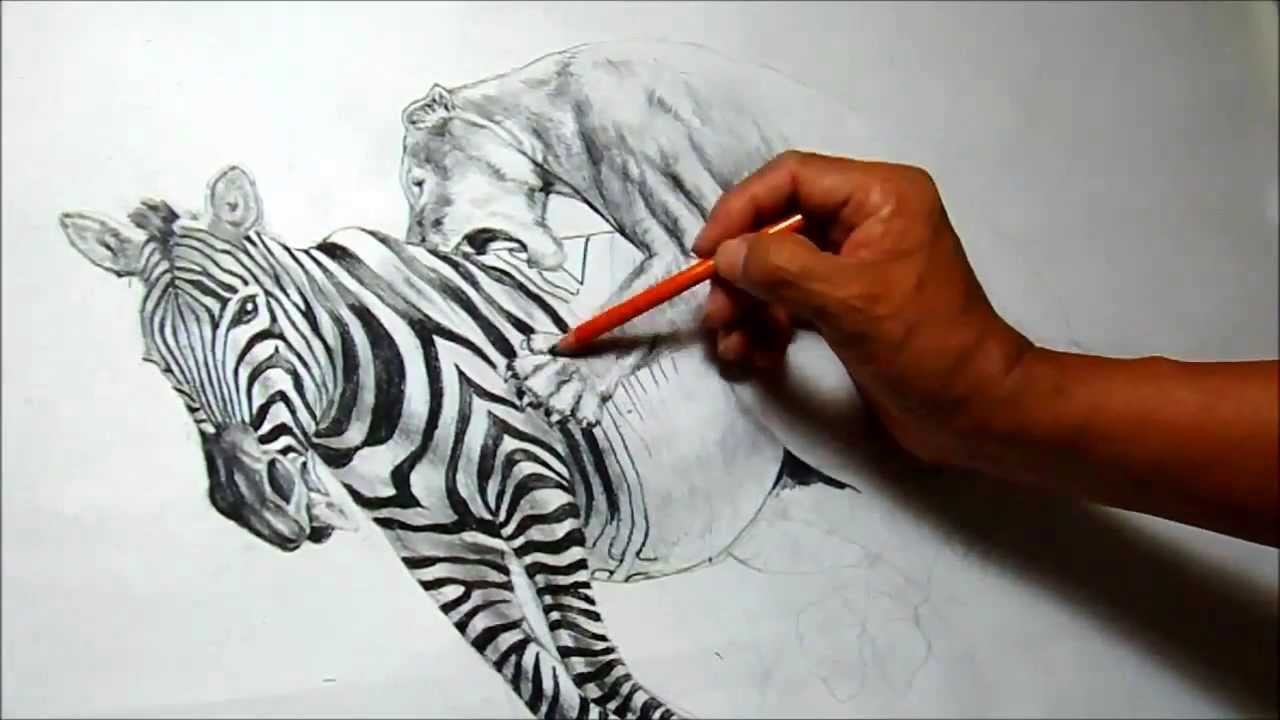lion hunting a zebra charcoal drawing - YouTube