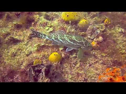 Glenelg Barge/Glenelg Dredge/Seacliff Reef 170213