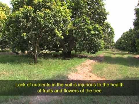 USAID Training Videos: Production and Cultural Practices in Mango Farming