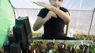 CARNIPLANT-Plantas carnivoras-Mecanismo de captura de Dionaea muscipula