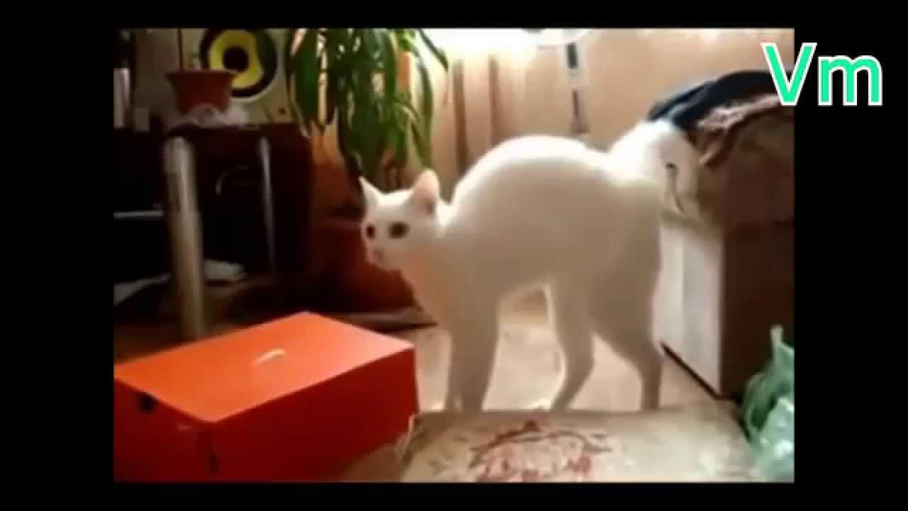 Прикольные кошки VL