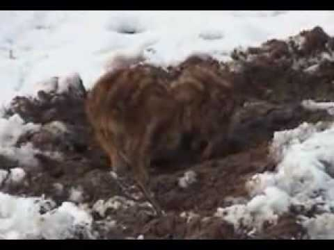 Young Wild Boars Video