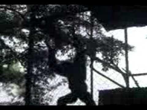 Nyemot Malu.3gp video