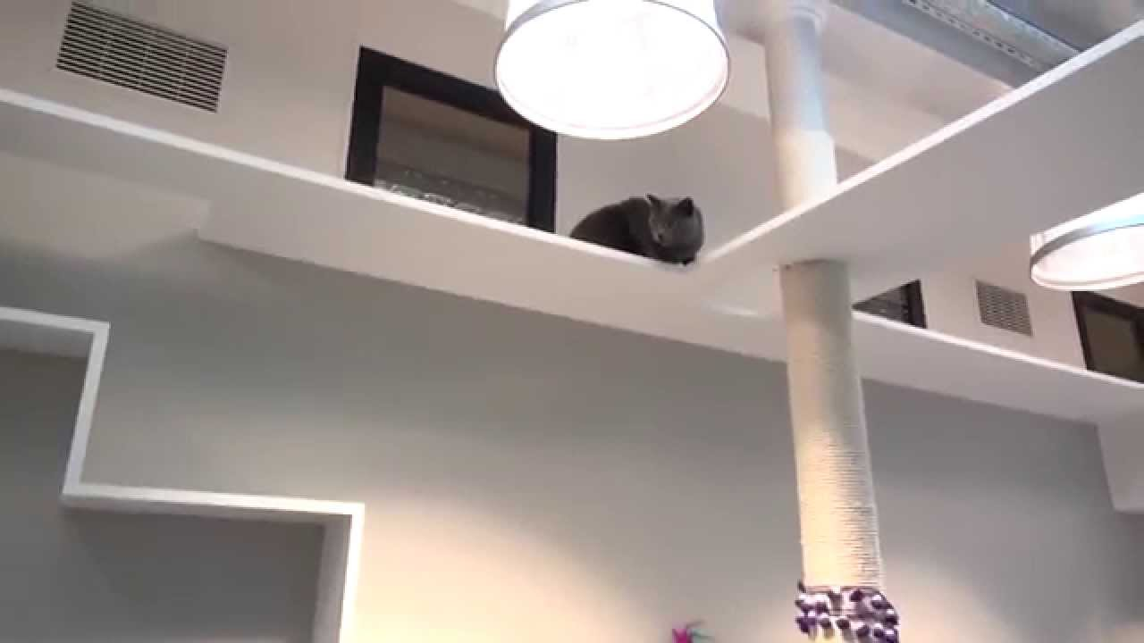 un h tel pour les chats paris youtube. Black Bedroom Furniture Sets. Home Design Ideas