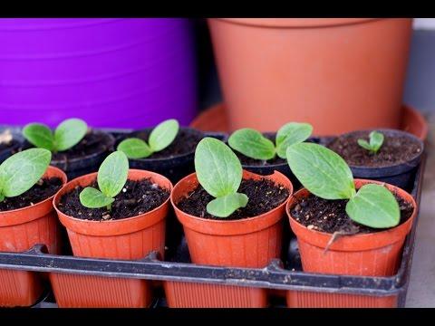 Mein Balkon Garten 2015 - Gemüse Und Kräuter Auf Balkonien