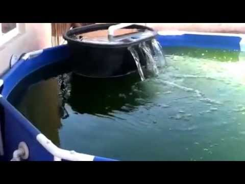 Diy pond how to save money and do it yourself for Build your own koi pond filter