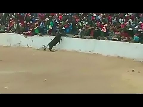 Bull jumps into crowd at bullfight in Peru