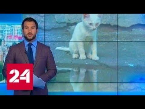 В Самарской области малолетки швыряли котенка в стену, пока он не умер