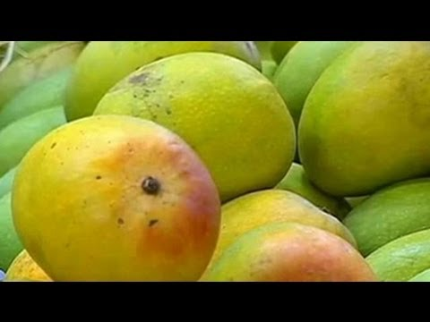 European Union ban on Alphonso mangoes unfortunate: FICCI
