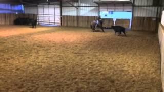 Bell- Jared Lesh cowhorses