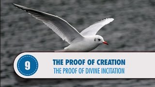 Video: Nature receives divine inspiration - Quran Miracle