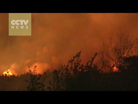 Fierce forest fire finally out after two-day blaze