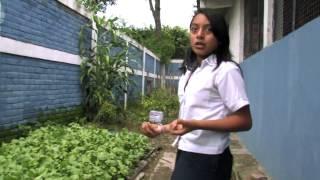 Del Huerto Escolar a la Alimentación y Salud Escolar