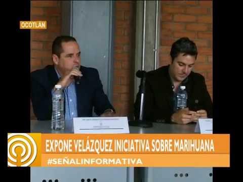 SEÑAL INFO / Realizarán consulta pública en Ocotlán sobre la regularización de la marihuana