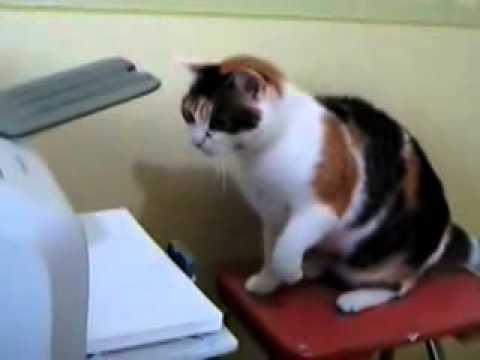 ебнутый кот