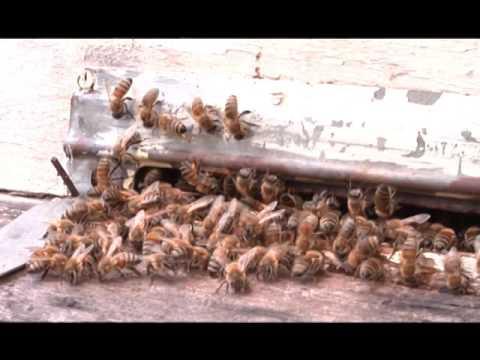 Про осінь, про бджілок та взагалі про життя...
