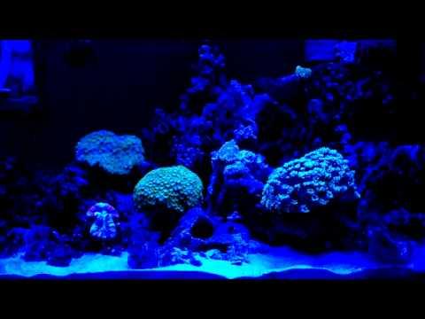 Led aquarium light blue light youtube for Blue light for fish tank