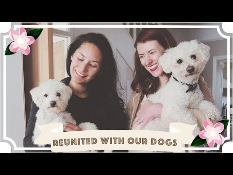 Reunion With Our Dogs After 8 Weeks! // Jessie & Claud // Malaysia Travel Vlog
