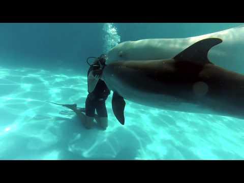 Дайвинг и дельфины это взрывной позитив!!!