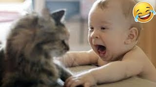 Ultimate Cute Cats and Funny Dogs Weekly LOL😂🙃 of 2019Funny Animal Videos👌