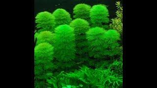 Danh mục các loại cây thủy sinh dễ trồng trong nước Phần 1