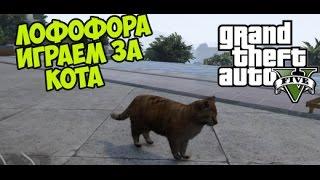 GTA 5 (PC) - Играем за животных (КОТ) - ЛОФОФОРА #1