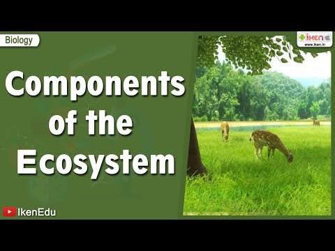 Components Of The Ecosystem video
