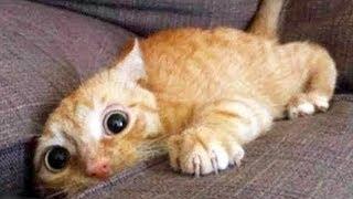 Hilarious Cat Viral Videos 😺😸😹 Ultimate Cat Compilation 2019