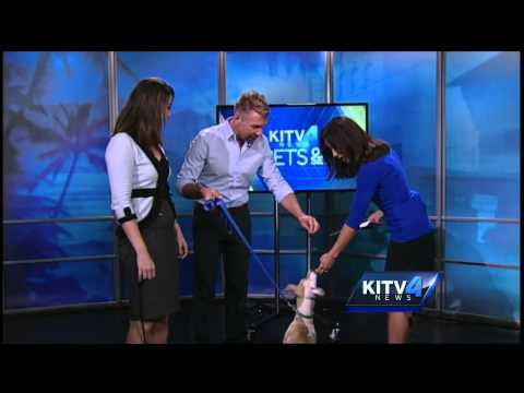 Pets on Set: Walk against animal cruelty