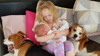 Big Sister and Cute Dogs Taking Care of Newborn Baby | Dogs Love Baby