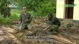 Video clip Những Loài Rắn Nguy Hiểm Nhất Châu Á