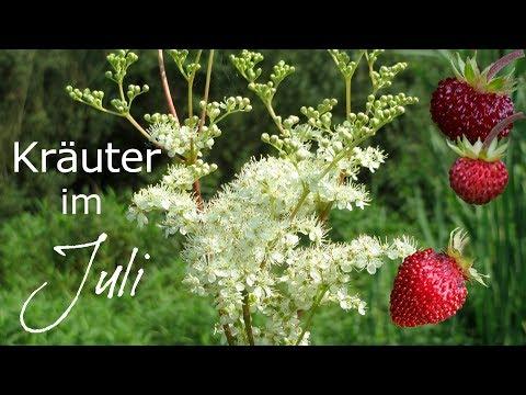 Das Kräuterjahr ✿ Heilpflanzen im Juli
