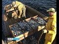 Карельские рыбаки отправились ловить ряпушку