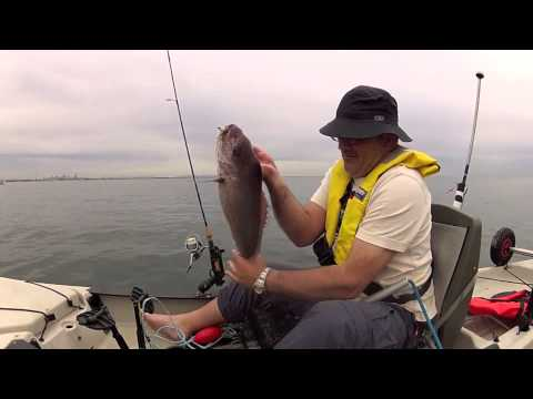 The Soft Plastic Boogie - Kayak Snapper Fishing