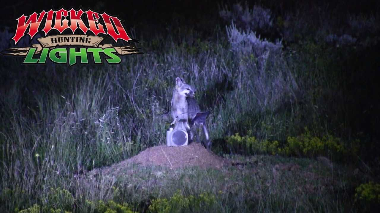 wicked lights night hunting fox with predator pursuit youtube. Black Bedroom Furniture Sets. Home Design Ideas