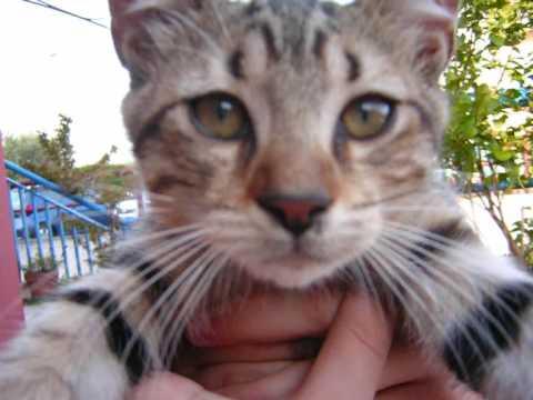 I gatti pi belli del mondo youtube for I gioielli piu belli del mondo