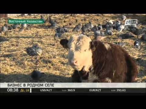 Житель села ВКО активно развивает животноводство