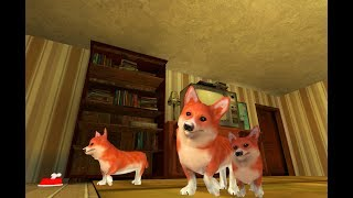 Corgi Dog Life Simulator 3D Gameplay Video Android/iOS