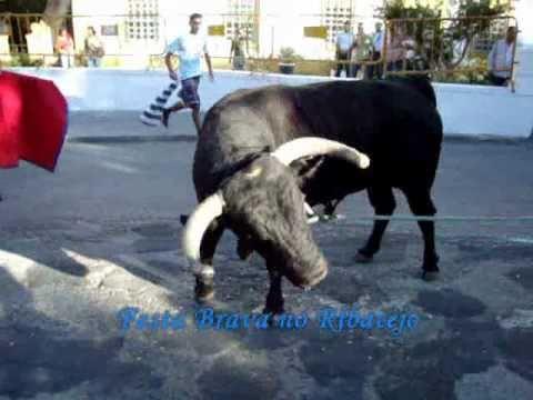 Coruche-Dia 18 Agosto 2010- Tourada à Corda- Ganadaria Pedro Damião