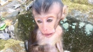 Baby monkey Lori before fall down from the tree